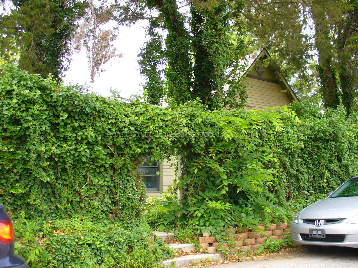 WTH Weds: Within These Ivy-Covered Walls
