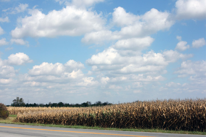 Mit.cornfield copy