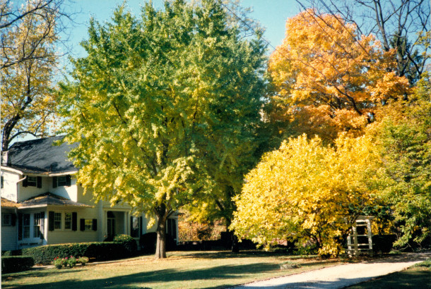 Haverway Farm in autumn (photo on loan from the personal collection of Cynthia Hargadon)