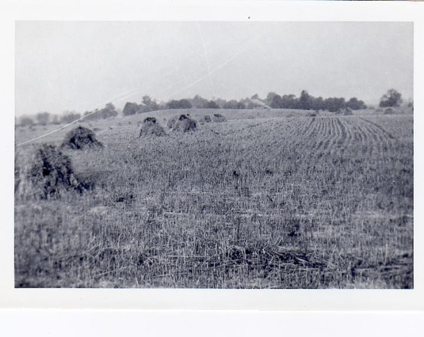 The view across the street from Ebenezer church (which later became Meadows shopping center). Roberts Dairy owned all the land from Millersville Road south to 38th Street. This was grazing land for their cows.