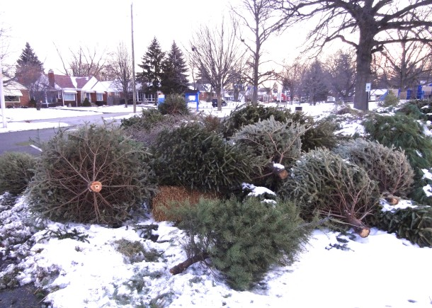 These Christmas Trees will be reused to create habitats for fish in lakes and ponds at various city parks