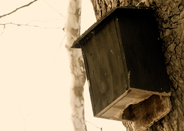 One of the many birdhouses seen on trees around Ellenberger Park