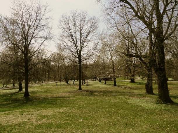 The mature trees of Bertha Ross Park provide shade to visitors.