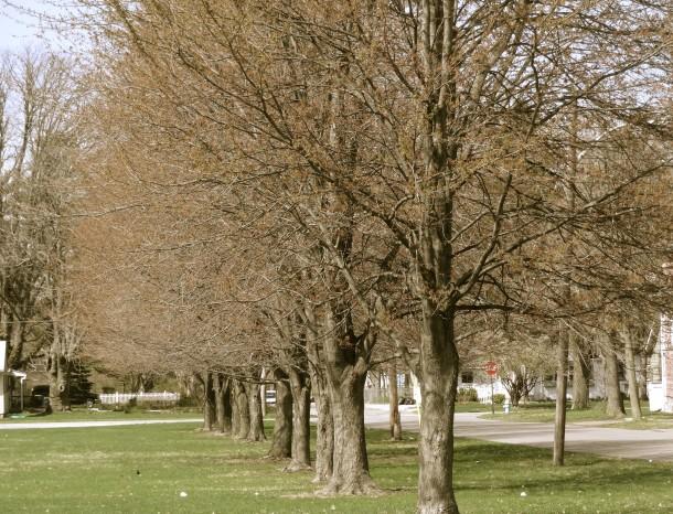 Trees along the eastern border of Arsenal Park.