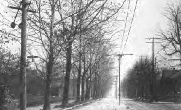 1912-sycamores